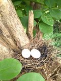 Η μικρή φωλιά πουλιών στοκ φωτογραφίες με δικαίωμα ελεύθερης χρήσης