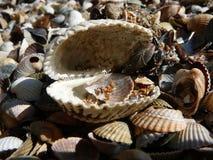 Η μοναδική φύση της θάλασσας Azov Στοκ Εικόνες