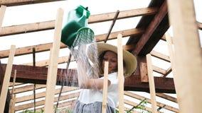 Η μοντέρνη γυναίκα στο καπέλο αχύρου και το φόρεμα χύνει τις συγκομιδές ποτίσματος σε μια κινηματογράφηση σε πρώτο πλάνο θερμοκηπ απόθεμα βίντεο