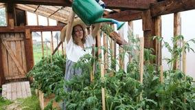 Η μοντέρνη ευτυχής νέα γυναίκα στο καπέλο αχύρου και το φόρεμα χύνει τις συγκομιδές ποτίσματος σε ένα θερμοκήπιο απόθεμα βίντεο