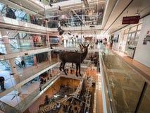Η ΜΟΥΣΑ είναι το μουσείο των επιστημών Trento Στοκ Εικόνα