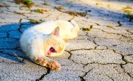 Η μπεζ αμερικανική γάτα Shorthair στο πάρκο στοκ εικόνες