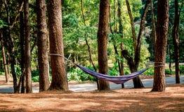 Η μπλε αιώρα κρεμά στα δέντρα στο δάσος πεύκων για την ανάπαυση με το ήπιο φως του ήλιου το πρωί Έννοια ταξιδιού χαλάρωσης στοκ φωτογραφίες