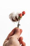 Η μπουτονιέρα στο χέρι Στοκ Εικόνες