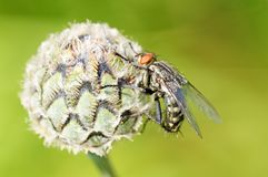Η μύγα κάθεται σε ένα πράσινο φύλλο Στοκ Εικόνα