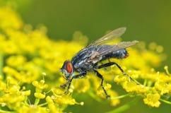 Η μύγα κάθεται σε ένα πράσινο φύλλο Στοκ φωτογραφία με δικαίωμα ελεύθερης χρήσης