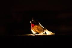 η μύγα μαθαίνει Στοκ φωτογραφία με δικαίωμα ελεύθερης χρήσης