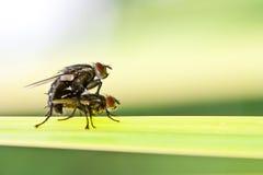 Δύο έντομα Στοκ Φωτογραφίες