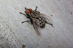 Η μύγα την άνοιξη ο ήλιος Στοκ Εικόνες