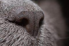 η μύτη μου Στοκ εικόνα με δικαίωμα ελεύθερης χρήσης