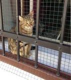 Η νέα γάτα θέλει να παίξει το εξωτερικό κλουβί Στοκ Φωτογραφία