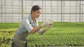 Η νέα γυναίκα βλέπει τα σπορόφυτα των πρασίνων στην κινηματογράφηση σε πρώτο πλάνο θερμοκηπίων