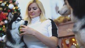 Η νέα γυναίκα δίνει ένα παιχνίδι πρώτα σε ένας από σιβηρικό γεροδεμένο της έπειτα άλλος στο υπόβαθρο εορτασμού Χριστουγέννων Εύθυ απόθεμα βίντεο