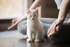 Η νέα γυναίκα στο μισό Lotus θέτει στο σπίτι με τη γάτα Στοκ φωτογραφίες με δικαίωμα ελεύθερης χρήσης