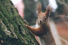 Η νέα γυναίκα ταΐζει το σκίουρο στο δάσος φθινοπώρου Στοκ Φωτογραφίες