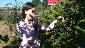 Η νέα γυναίκα brunette τρώει τα σμέουρα, λυσσασμένα αυτό από τους θάμνους στη χώρα απόθεμα βίντεο