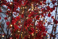 Η νέα σύνθεση έτους φιαγμένη από ασημένιους κλάδους, έλατο διακλαδίζεται και κόκκινα μούρα νέο έτος θέματος στοκ φωτογραφία