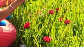 Η νέα όμορφη κυρία κάθεται στην πράσινη χλόη με τα κόκκινα λουλούδια απόθεμα βίντεο