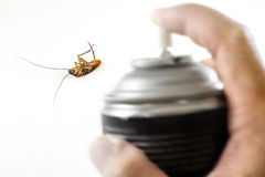 Η νεκρή κατσαρίδα, που σκοτώνεται από τον έλεγχο παρασίτων με το μαύρο ψεκασμό στο χ Στοκ Φωτογραφίες