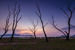 Η νεκρή ομάδα δέντρων Στοκ φωτογραφία με δικαίωμα ελεύθερης χρήσης