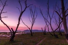 Η νεκρή ομάδα δέντρων Στοκ Εικόνες