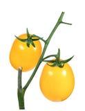 Η ντομάτα κίτρινη, δέσμη απομονώνει σε μια άσπρη κινηματογράφηση σε πρώτο πλάνο υποβάθρου Στοκ Εικόνες