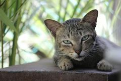 Η νυσταγμένη γάτα στοκ εικόνες