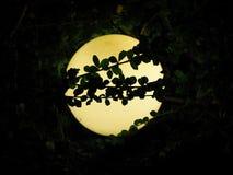 Η νύχτα φαναριών ανάβει τους κλάδους δέντρων Στοκ Εικόνες