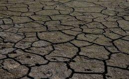 Η ξηρά γη και το εργοστάσιο Στοκ Εικόνες
