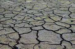Η ξηρά γη και το εργοστάσιο Στοκ Φωτογραφία