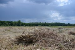 η ξηρά, κομμένη χλόη βρίσκεται στον τομέα κάτω από το σκοτεινό θυελλώδη ουρανό στοκ φωτογραφίες με δικαίωμα ελεύθερης χρήσης