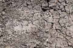 Η ξηρασία, η γη ράγισε λόγω της ξηρασίας, ξηρά χλόη στο έδαφος στοκ εικόνες με δικαίωμα ελεύθερης χρήσης
