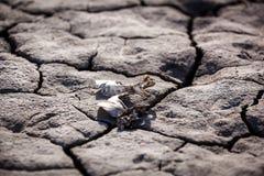 Η ξηρασία, ξηρά γη, θλίψη, στέγνωσε το νερό στοκ εικόνα