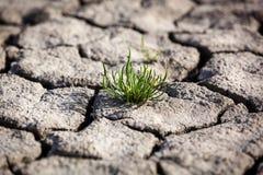 Η ξηρασία, ξηρά γη, θλίψη, στέγνωσε το νερό στοκ φωτογραφία με δικαίωμα ελεύθερης χρήσης