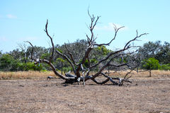 Η ξηρασία πλησιάζει Στοκ Εικόνες