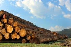 Η ξυλεία συνδέεται το δάσος Στοκ Εικόνα