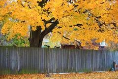 Η ξύλινη φραγή με την πτώση χρωμάτισε τα φύλλα στο backg Στοκ εικόνες με δικαίωμα ελεύθερης χρήσης