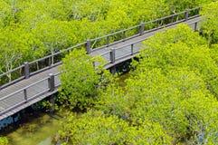 Η ξύλινη διάβαση πεζών γεφυρών στο δάσος μαγγροβίων στο δάσος Pranburi Στοκ Εικόνες