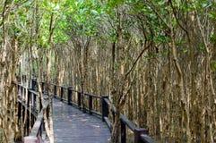 Η ξύλινη διάβαση πεζών γεφυρών στο δάσος μαγγροβίων στο δασικό εθνικό πάρκο Pranburi, Prachuap Khiri Khan, Ταϊλάνδη Στοκ Φωτογραφία