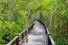 Η ξύλινη διάβαση πεζών γεφυρών στο δάσος μαγγροβίων στο δασικό εθνικό πάρκο Pranburi, Prachuap Khiri Khan, Ταϊλάνδη Στοκ Φωτογραφίες
