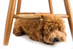 Η ξύλινη καρέκλα άσχημα κατεστραμμένη από το άτακτο σκυλί μασά και δαγκώματα στοκ φωτογραφία