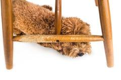 Η ξύλινη καρέκλα άσχημα κατεστραμμένη από το άτακτο σκυλί μασά και δαγκώματα στοκ φωτογραφίες