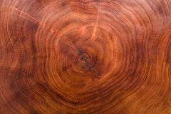 Η ξύλινη σύσταση έκοψε τον κορμό δέντρων στοκ φωτογραφία