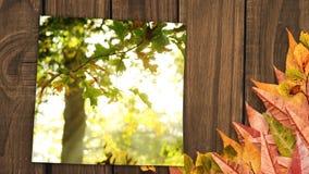 Η οθόνη που περιβάλλεται με την παρουσίαση φύλλων φθινοπώρου αφήνει την πτώση στο δάσος κατά τη διάρκεια της εποχής πτώσης απόθεμα βίντεο