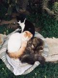 Η οικογένεια γατών Στοκ εικόνα με δικαίωμα ελεύθερης χρήσης