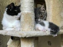 Η οικογένεια γατών ` s στο ράφι γατών στοκ φωτογραφίες με δικαίωμα ελεύθερης χρήσης