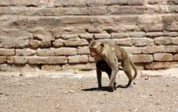 η οικογένεια μωρών καλλωπίζει τη μητέρα πιθήκων macaque της Στοκ εικόνες με δικαίωμα ελεύθερης χρήσης