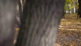 Η οικογένεια ξοδεύει τις διακοπές τους στο δάσος φθινοπώρου απόθεμα βίντεο