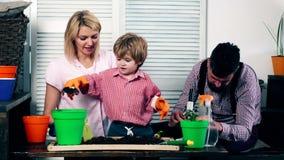 Η οικογένεια που φυτεύει τα σπορόφυτα στα χρωματισμένα δοχεία Έννοια των σποροφύτων Το αγόρι, το mom και ο πατέρας του έχουν το χ απόθεμα βίντεο