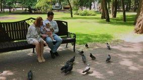 Η οικογένεια ταΐζει τα περιστέρια στον πάγκο πάρκων απόθεμα βίντεο